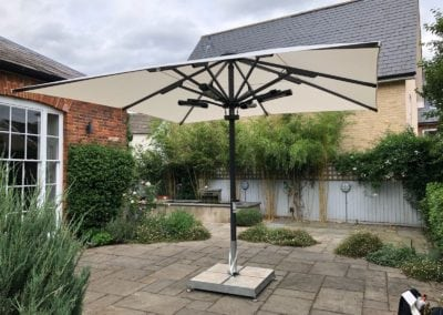 Domestic Giant Parasol3